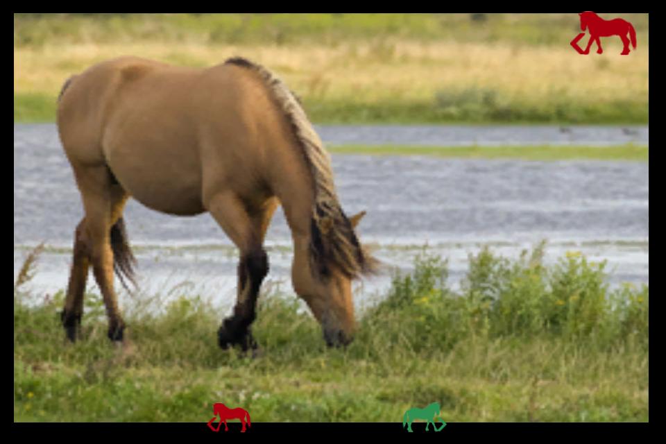 Screenshot Horses and darts for children